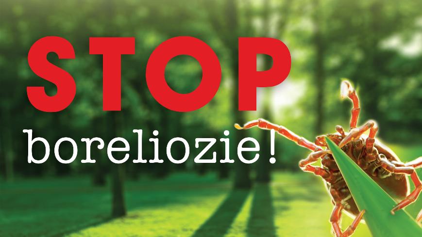 Grafika przedstawia kleszcza na trawie oraz szczegółowe informacje o projekcie STOP BOLERIOZIE